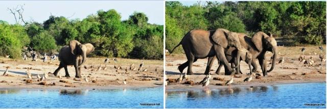 Elephant-41