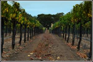 Annika-California-2012-Brdr-27