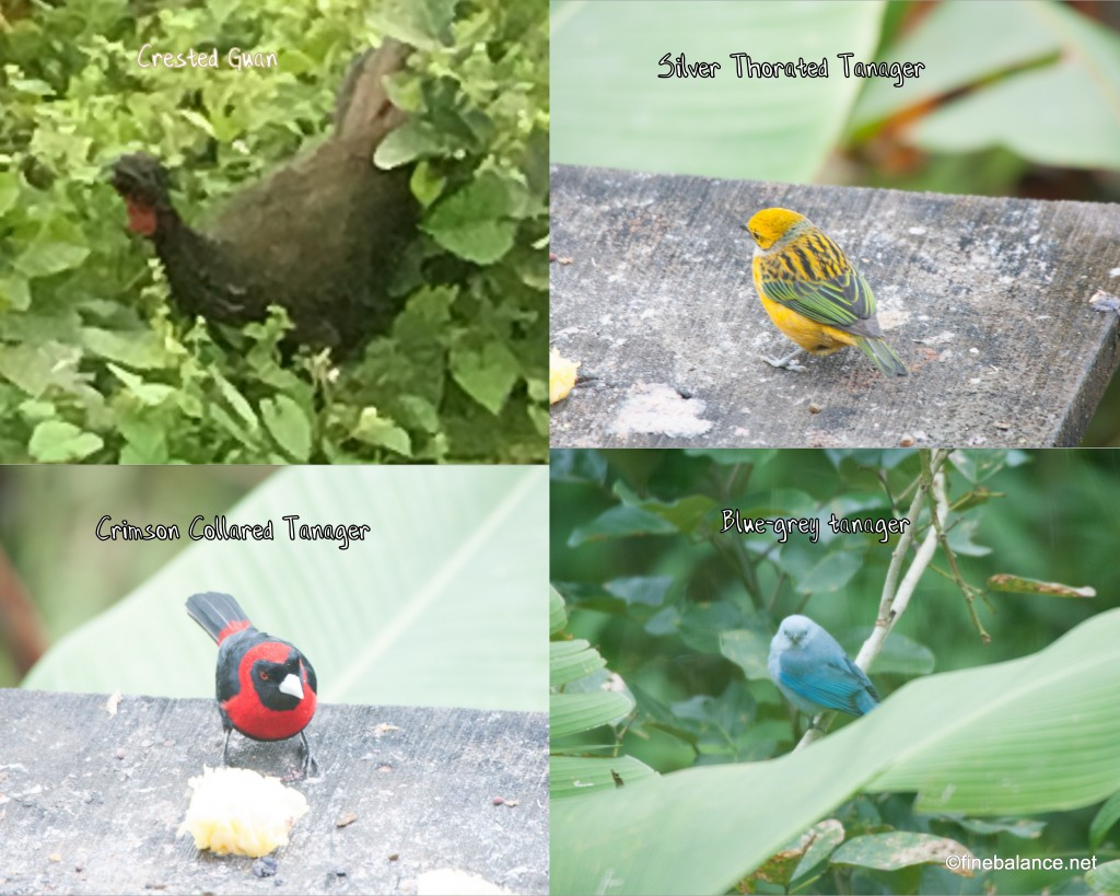 Birds at Arenal Lodge
